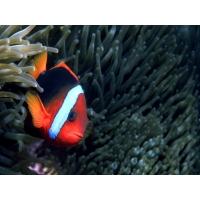 Тропическая рыбка картинки, обои и фоновые рисунки для рабочего стола бесплатно