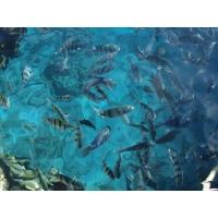 рыбки красного моря картинки и фоны для рабочего стола windows
