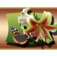 Бабочка заставки на рабочий стол и прикольные картинки