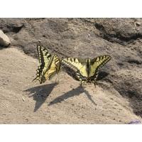 Бабочки картинки и обои бесплатно