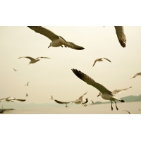Чайки у моря скачать красивые обои для рабочего стола