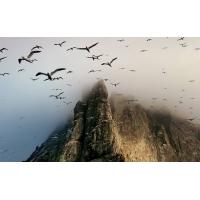 Стая птиц скачать картинки и рисунки для рабочего стола