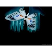 Бабочки обои (7 шт.)