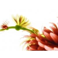 Цветы обои (5 шт.)