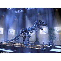 Динозавры обои (2 шт.)
