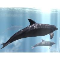 Дельфины обои (8 шт.)