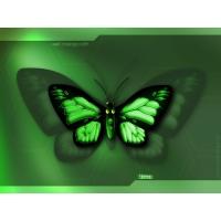 Бабочки обои (6 шт.)