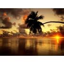 Пальма и закат над морем - клевые картинки - тюнинг рабочего стола, тема - небо
