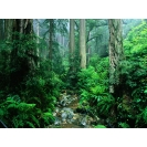 Великолепная природа в лесу - супер обои!, фото на рабочий стол бесплатно