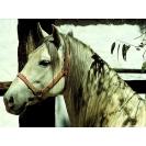 Лошадь фоновые