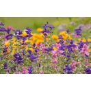 Луговые  полевые цветы картинки, лучшие картинки на рабочий стол, обои для рабочего стола