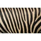 Полосы типа зебра картинки, фото обои и картинки