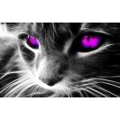 Фиолетовые глаза - обои и картинки на рабочий стол бесплатно