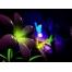 (1000х1200, 860 Kb) цветы, обои и красивые картинки на рабочий стол