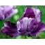 (1000х1200, 860 Kb) какой то цветок, обои на рабочий стол бесплатно и картинки