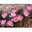 (1000х1200, 860 Kb) Яркие и красивые цветы - обои нарабочий стол., картинки и бесплатные рисунки для рабочего стола
