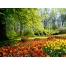 (1000х1200, 860 Kb) Яркие краски весны - цветочная поляна, картинки и качественные обои на рабочий стол