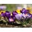 (1000х1200, 860 Kb) Фиолетовые цветы - симпатичные обоидля компьютера., фотографии на рабочий стол