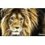 (1000х900, 224 Kb) лев нарисованный светом, обои для рабочего стола компьютера