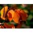 Осенняя обои