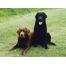 Собака, обои