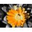 (1000х1200, 420 Kb) Пчелка в центре - картинки и обои рабочего стола скачать бесплатно