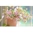 (1000х1200, 379 Kb) Цветы на окне - картинки и новые обои на рабочий стол