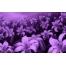 (1000х1200, 379 Kb) Цветочные сны - новейшие обои на рабочий стол и картинки