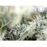 (1000х1200, 693 Kb) Зима - обои скачать бесплатно и фотографии