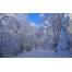 (1000х1200, 699 Kb) Зимняя сказка - обои на рабочий стол бесплатно и картинки