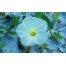 (1000х1600, 269 Kb) Цветок на снегу - бесплатные картинки и обои на рабочий стол