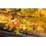 (1000х1200, 699 Kb) Интересные листья - картинки и широкоформатные обои для рабочего стола