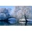 (1000х1200, 699 Kb) Зимний парк - обои и фото на красивый рабочий стол скачать