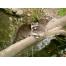 (1000х864, 257 Kb) Два енота на бревне - обои скачать бесплатно и фотографии
