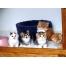 (1000х1200, 413 Kb) Разноцветные котята - скачать обои, гламурный рабочий стол