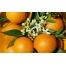 (1000х1050, 575 Kb) Красивые апельсины - новейшие обои и фото