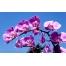 (1000х1200, 379 Kb) Летние цветы - бесплатные обои на рабочий стол и картинки