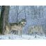(1000х1200, 413 Kb) Волки - картинки, обои, скачать заставку на рабочий стол