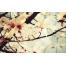 (1000х1200, 379 Kb) Цветы - красивые обои на рабочий стол