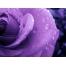 Фиолетовая обои