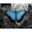Обои на kards.qip.ru - Фоновые рисунки с тегом Бирюзовый - Бирюзовые крылышки.