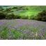 (1000х1200, 693 Kb) Цветущий луг красивое фото на рабочий стол и картинки