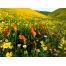 (1000х1200, 693 Kb) Зеленый луг картинки и бесплатные рисунки для рабочего стола